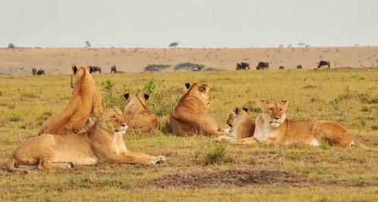 Royal Mara Safari Lodge: photo3.jpg