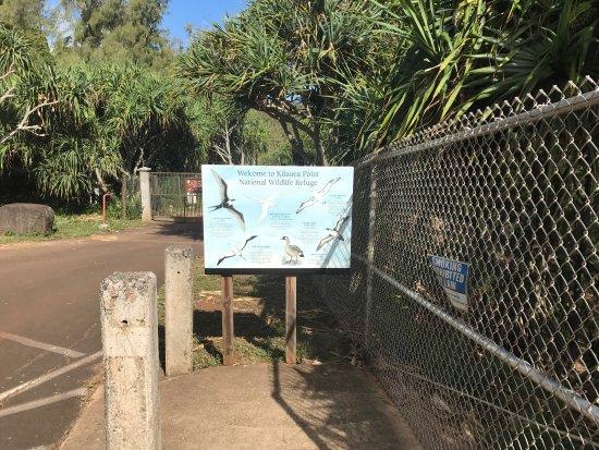 Kilauea, Hawaï: photo1.jpg