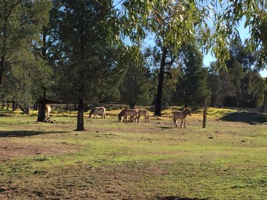 Ντάμπο, Αυστραλία: photo9.jpg