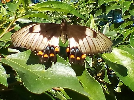 Bribie Island Butterfly House: Beautiful