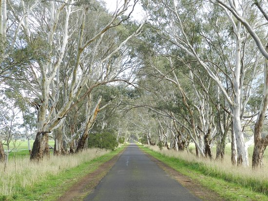 Hamilton, Australien: Avenue of gums on Wannon-Nigretta Falls Road