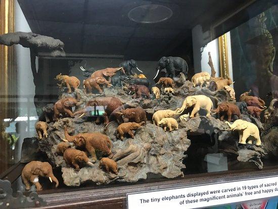 世界昆虫及自然奇观博物馆 (清迈) - 旅游景点点评 - TripAdvisor