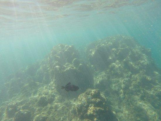 ฮานาเลย์, ฮาวาย: Beautiful fish!