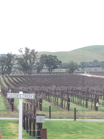 Rowland Flat, Австралия: Views of the vineyard in the winter season