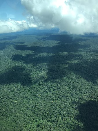 View from Gum air flight to Kabalebo - broccoli