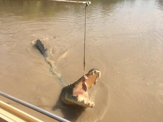 Spectacular Jumping Crocodile Cruise: photo9.jpg