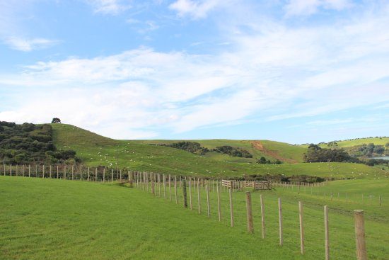 Whangaparaoa, New Zealand: 很大的草地