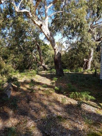 Port Albert, Australia: A nice trail for a stroll!