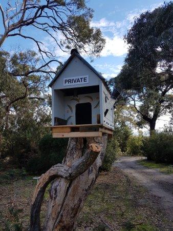 Port Albert, Australia: They even accommodate the birds!