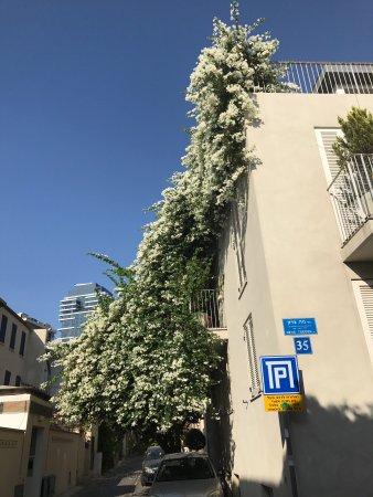 Neve Tzedek Tel Aviv All You Need To Know Before You Go Tripadvisor