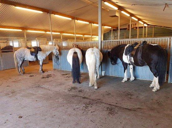 Borgarnes, IJsland: Hestaland