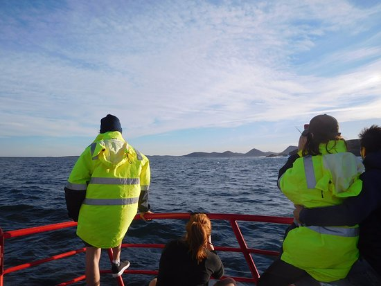Nelson Bay, Australia: whale spotters