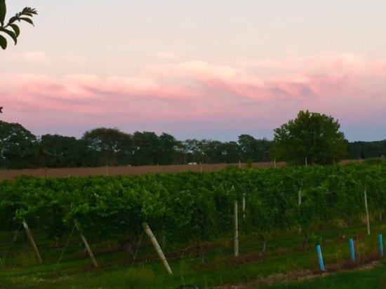 Cutchogue, Estado de Nueva York: Nice sunset over the vineyards