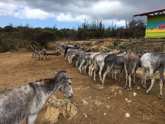 Santa Cruz, Aruba: net vers hooi gekregen