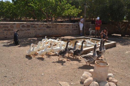 Lalla Takerkoust, Morocco: Marre aux oies