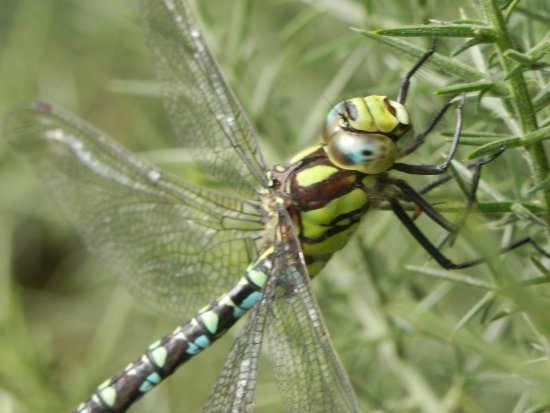 Элгин, UK: Dragonfly - So and tame close I could have scratched it's chin. Example of what you can find.