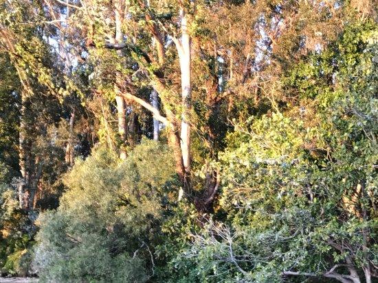 Noosaville, Australia: Mangroves.