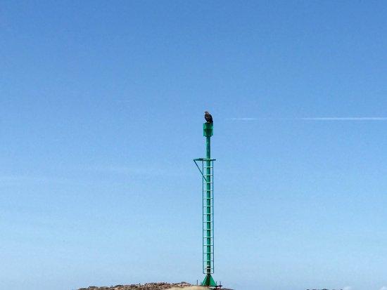 Island Cruises Whalewatching: Juvenile bald eagle