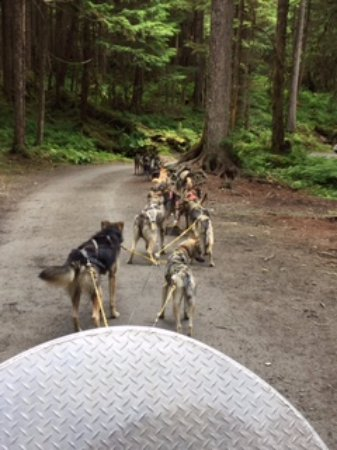 Dog Sled Discovery & Musher's Camp: view of the dogs pulling the cart
