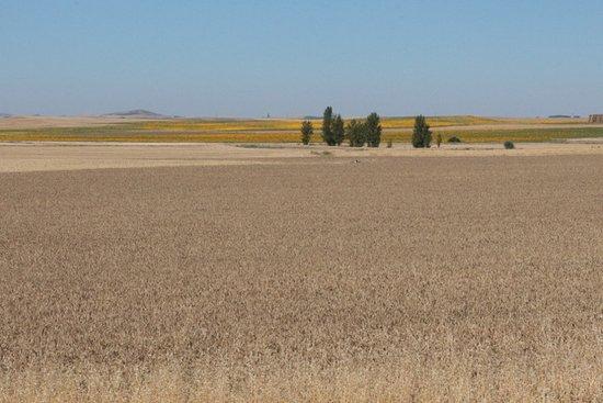Villafranca de los Barros, Spagna: la campagna nei dintorni ....