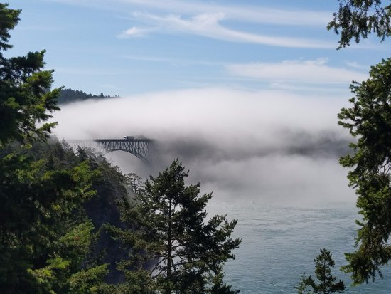 Oak Harbor, Вашингтон: Great picture of the bridge partially covered in a fog bank.