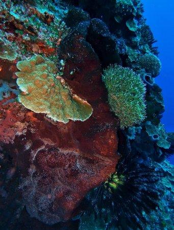 North Sulawesi, อินโดนีเซีย: Limangu Diving Centre