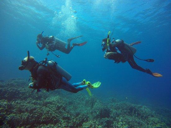 Waikoloa, HI: Welcome to the wonderful world of Scuba Diving !!