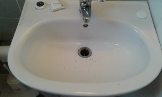 Questo il lavandino del bagno pieno di formiche un - Formiche in bagno ...