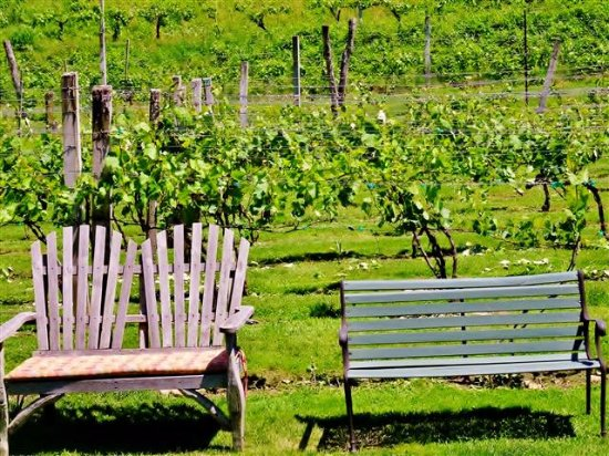 Grandfather Vineyard & Winery: Relax by the Vines.