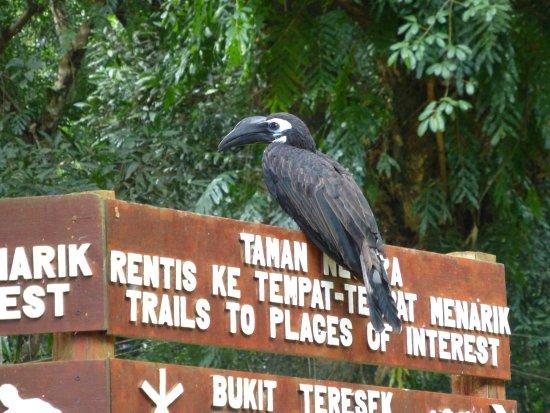 Mutiara Taman Negara: photo0.jpg