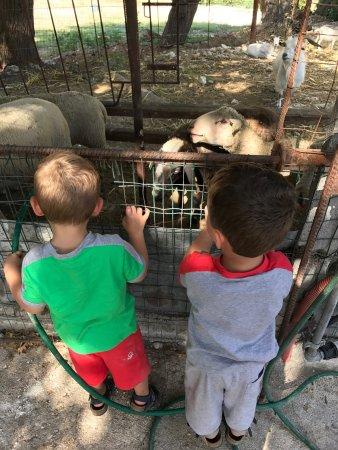 Mafalda, Itália: Bimbi ed animali e dolcetti