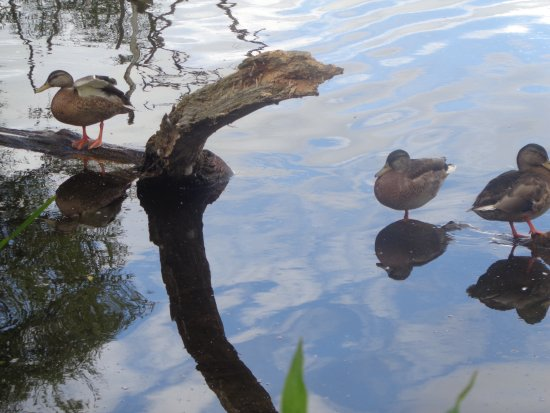 Ellesmere, UK: More Locals