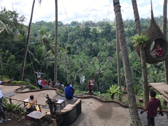 This one day tour up to ubud and stop at bongkasa village for Swingvillage