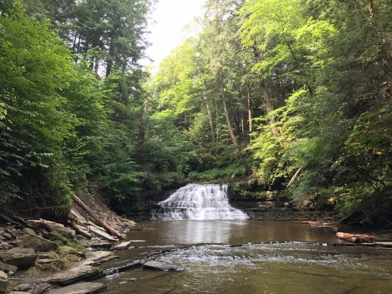 Salt Springs State Park: the first of 3 waterfalls