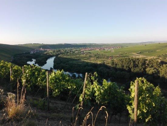 Dettelbach, ألمانيا: Blick von Neuses am Berg auf die Mainschleife und Escherndorf, Nordheim
