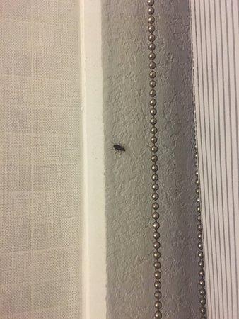 Woodbridge, VA: Roaches present in guest room