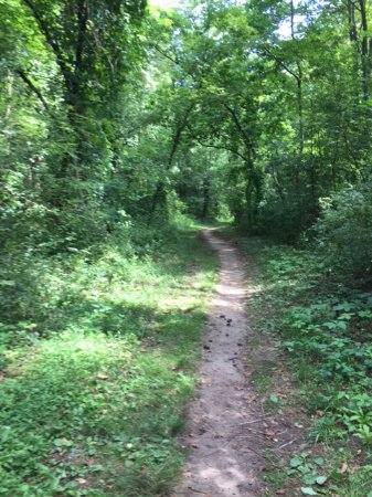 Augusta, MI: One of several hiking/biking trails.
