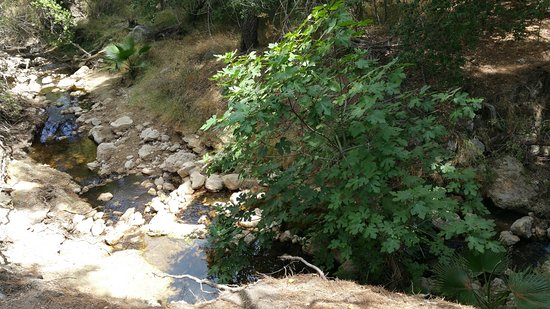 San Fernando, CA: Small creek along the trail
