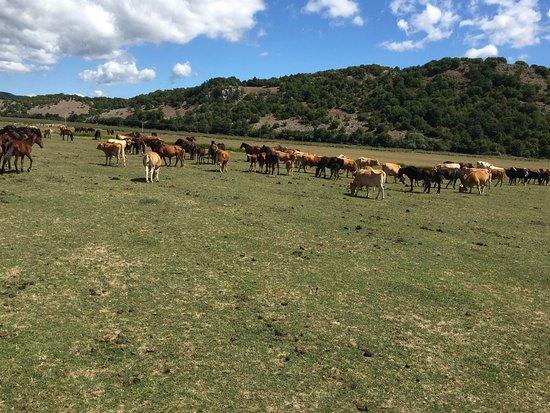Ranch Brionna : photo3.jpg