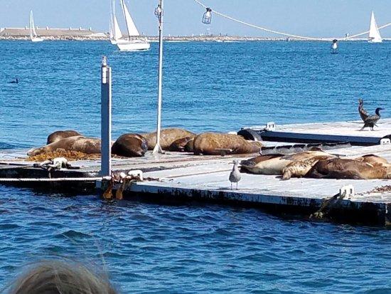 San Diego Seal Tours: Sunbathing seals