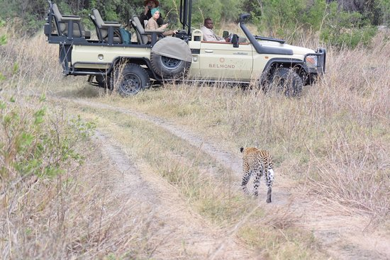 Belmond Khwai River Lodge : animal sights were not overly crowded, sometimes 2-3 vehicles but usually just one.