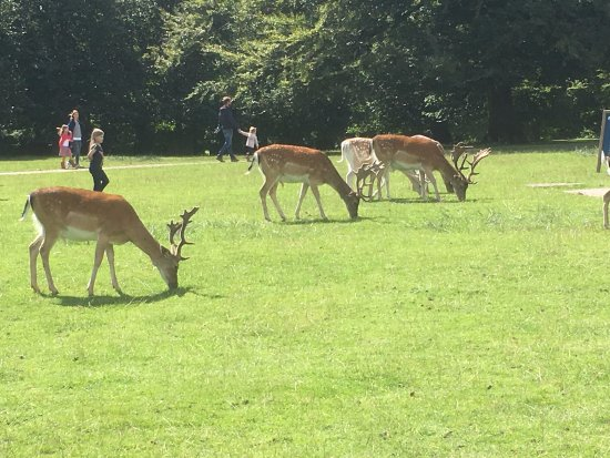 Altrincham, UK : Deer in the gardens