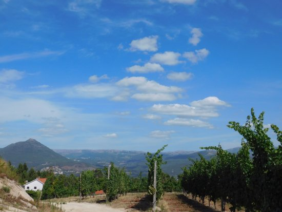 Celorico de Basto, Πορτογαλία: as vinhas