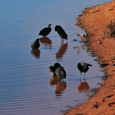 Whyalla, Australia: Water birds at shoreline