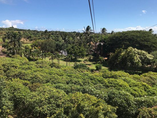 Wailuku, HI: Zip through beautiful trees.