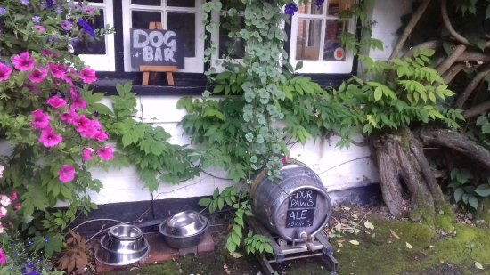 Sonning on Thames, UK: Doggy bar - water for your canine friend