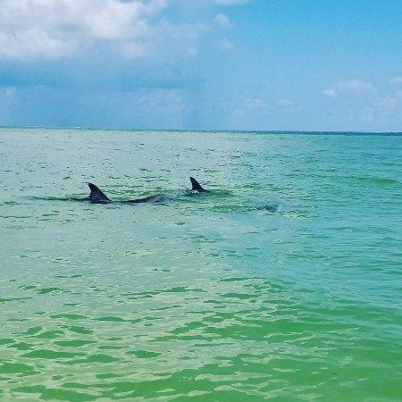 Cortez, FL: IMG_20170816_140859_081_large.jpg