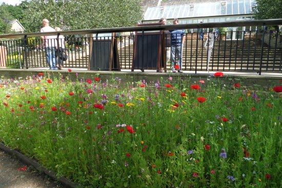 RHS Garden Harlow Carr: Near the entrance