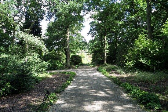 RHS Garden Harlow Carr: In the woods