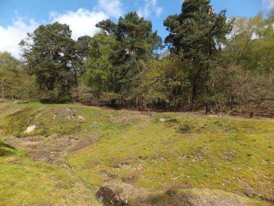 Alderley Edge, UK: enjoy the views